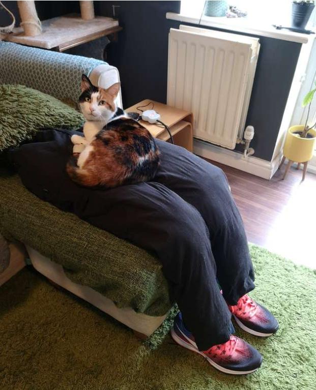 猫用の膝に乗る猫