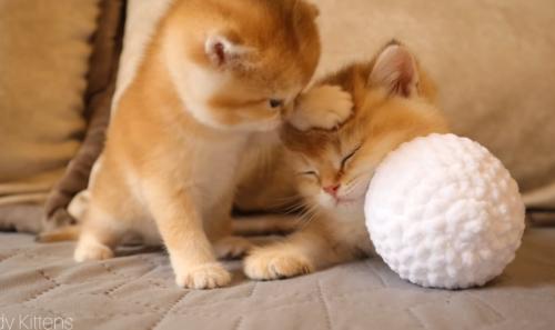 子猫を手で起こそうとする子猫
