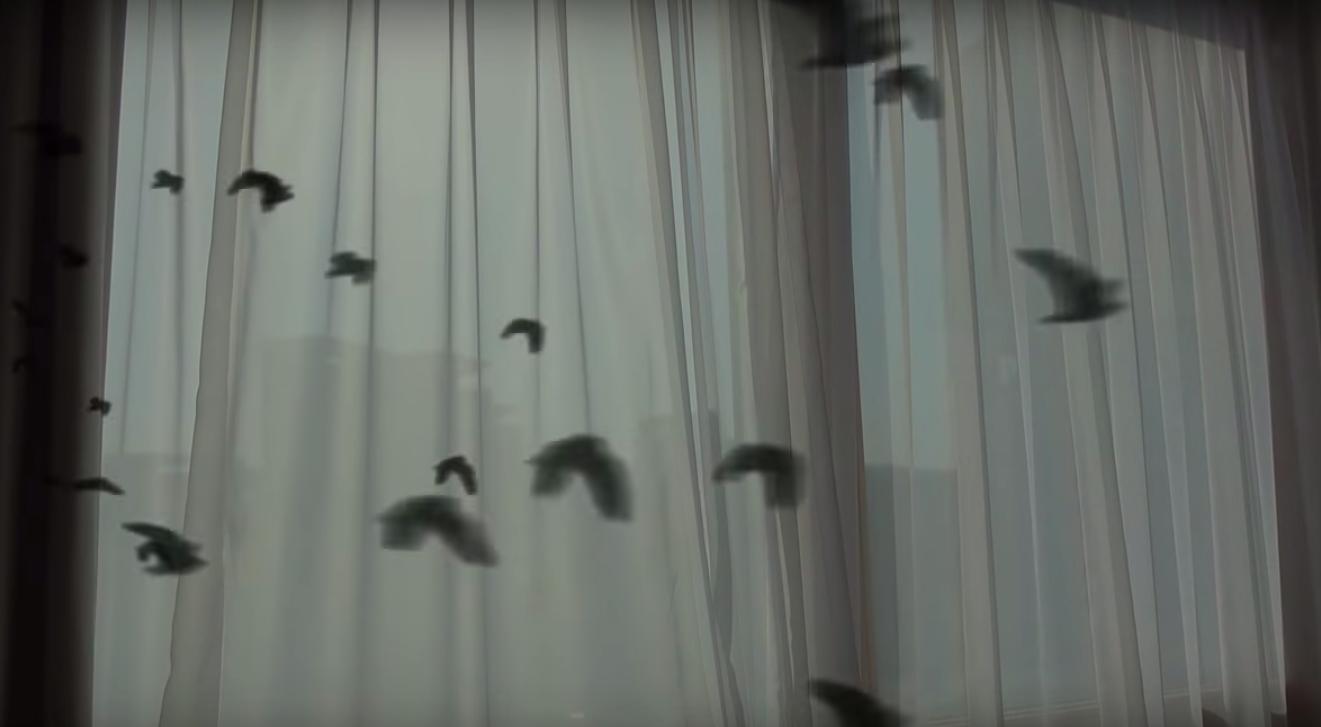 窓に映る大量の鳥の影