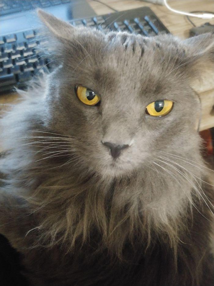 撫でるのをやめたら怒った猫