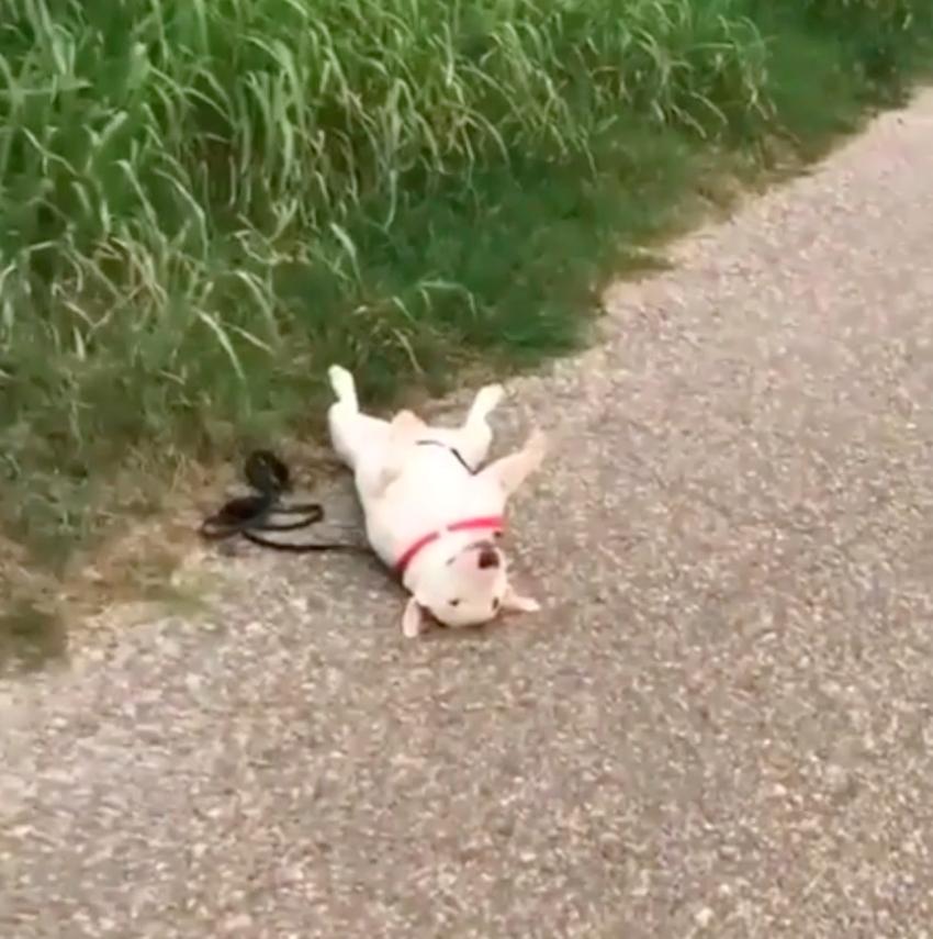 道に落ちてる犬