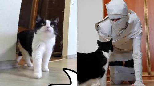 ミイラ男と猫