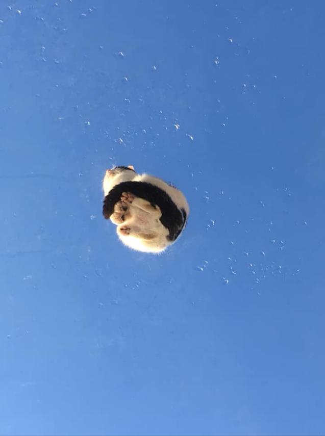 青空に浮かぶ猫