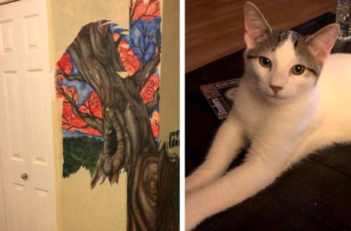 壁紙の下の壁画を発見した猫