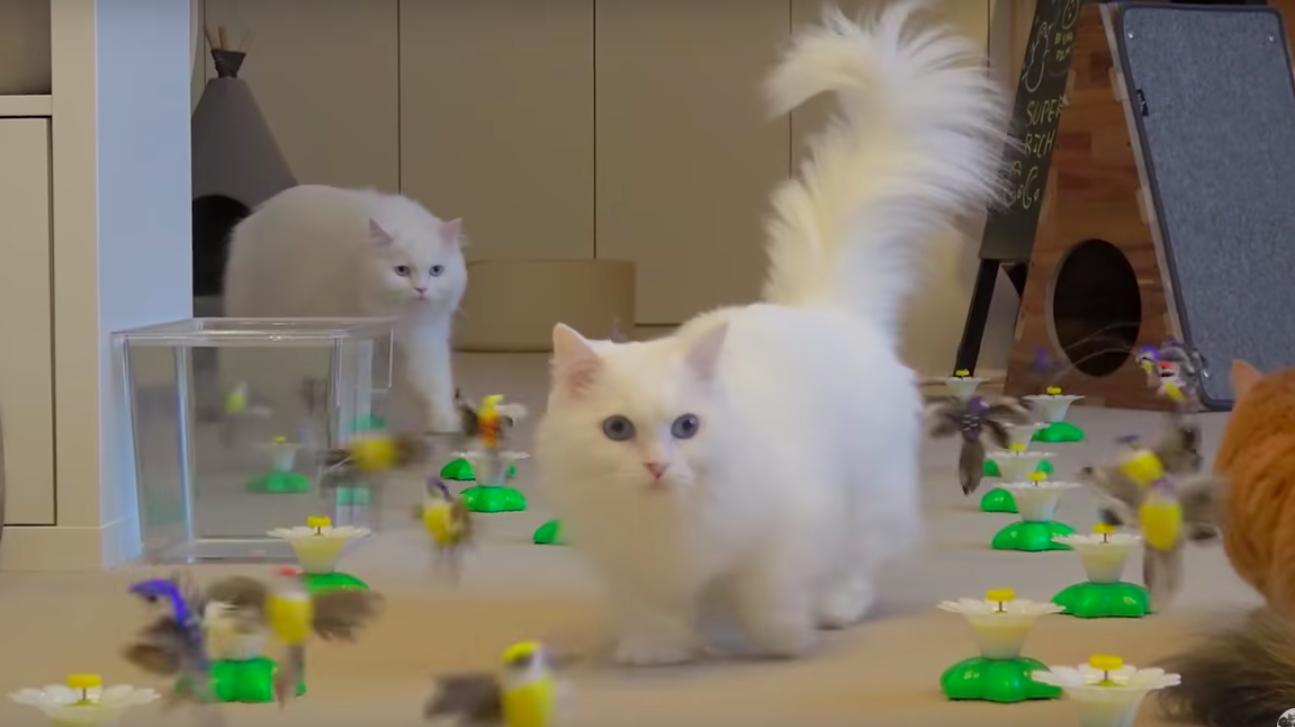 たくさんあって困惑する猫