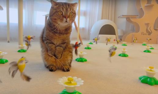 鳥の多さに困惑する猫