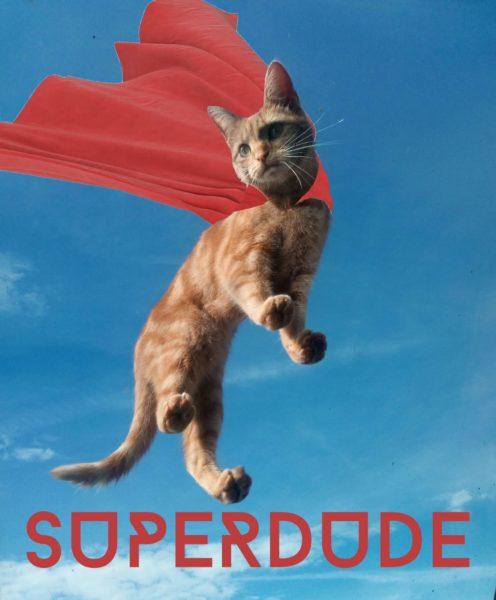スーパーマン猫