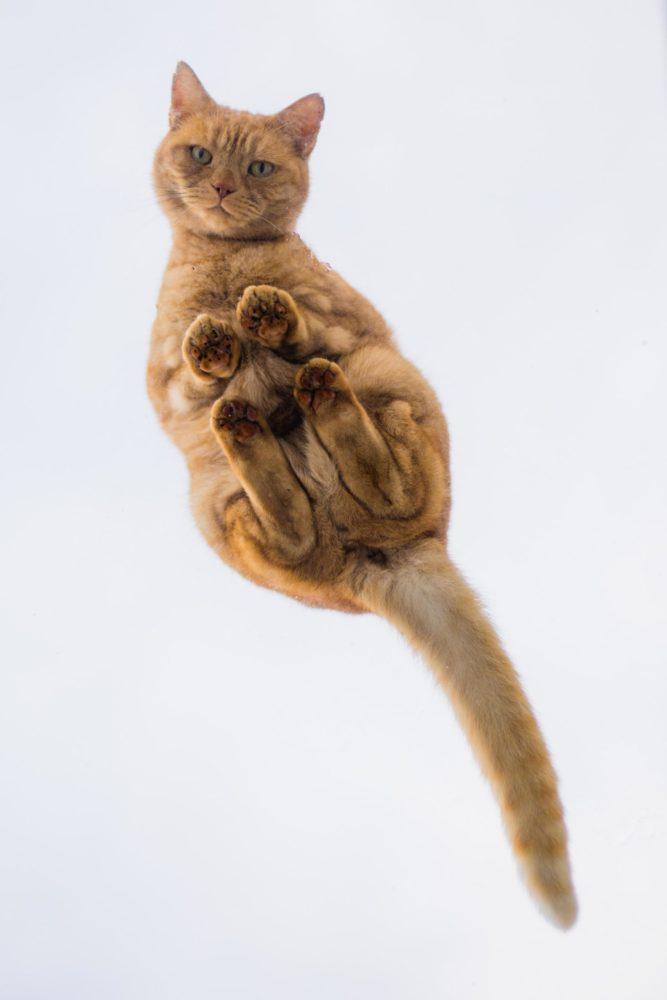 サンルーフ猫