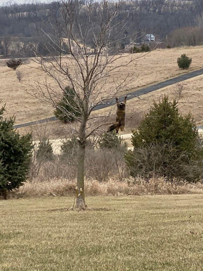 木の枝に捕まっている猫