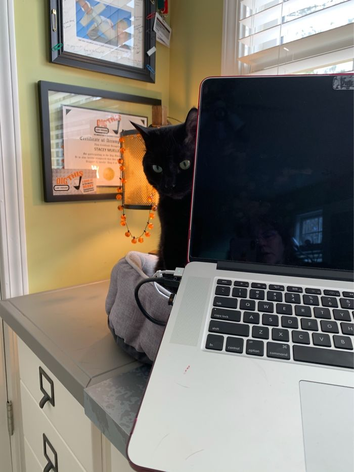 パソコンのケーブルをかじった猫