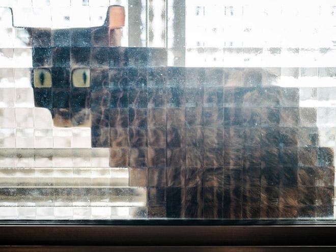 凹凸窓越しの猫