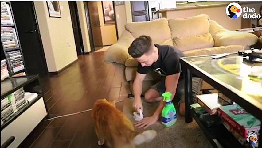 猫の吐瀉物を掃除する