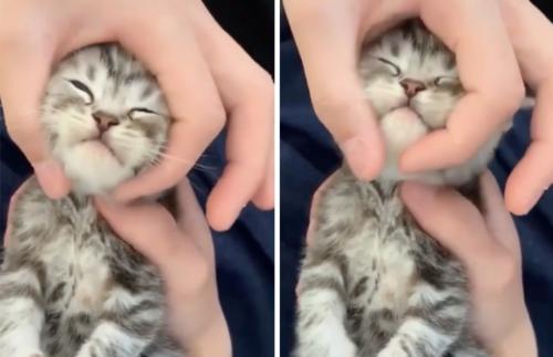 撫でられる子猫