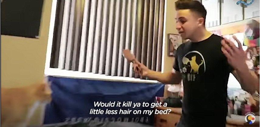 毛だらけのベッド