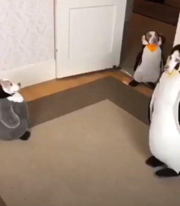 ペンギンの着ぐるみを着た犬