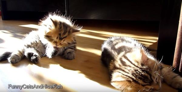 日向ぼっこする子猫たち