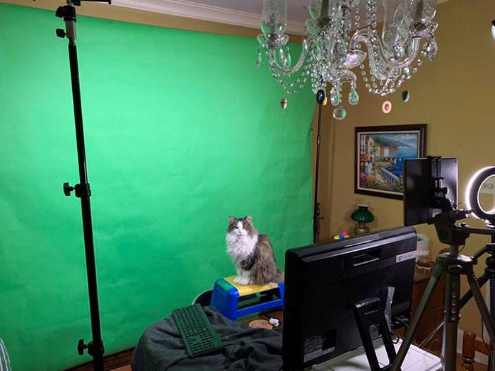 グリーンスクリーンの前にいる猫