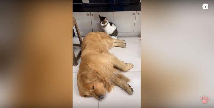 寝ている犬と見つめる猫