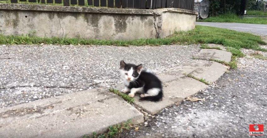 道路にたたずむ子猫
