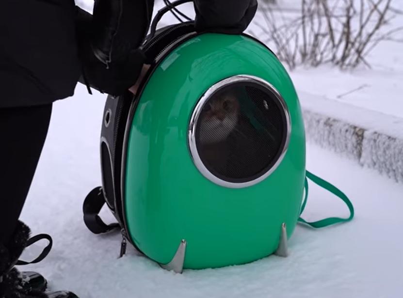 宇宙船のバッグに入った猫のホシコ