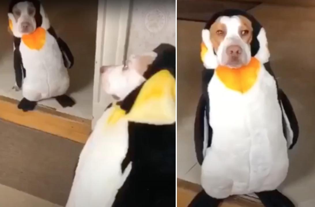 ペンギン犬