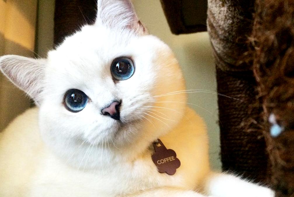 ガンを乗り越えた猫コーヒー