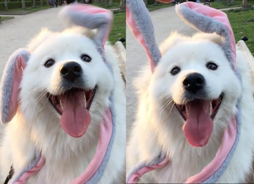ウサギになった犬