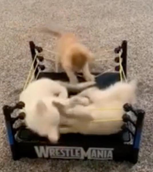 ロープブレイクを注意する猫