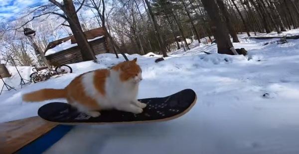 スノボに乗る猫