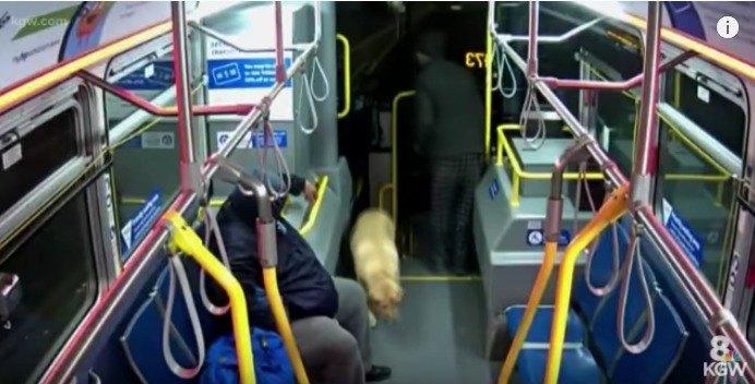 バスに乗り込む様子