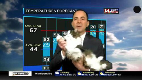 天気予報に出演した猫