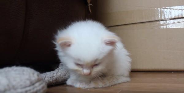 床に倒れそうになる子猫