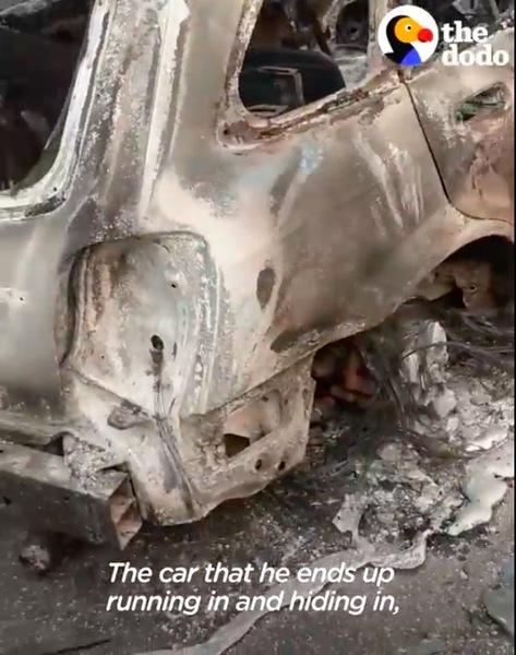 焼け焦げた車に逃げる
