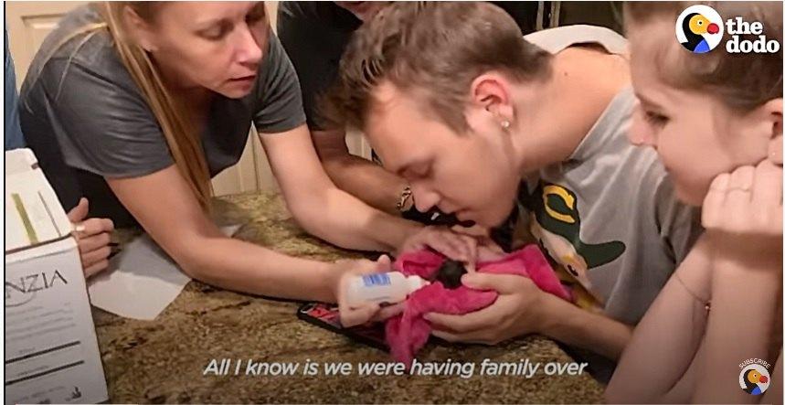 子猫を救う家族