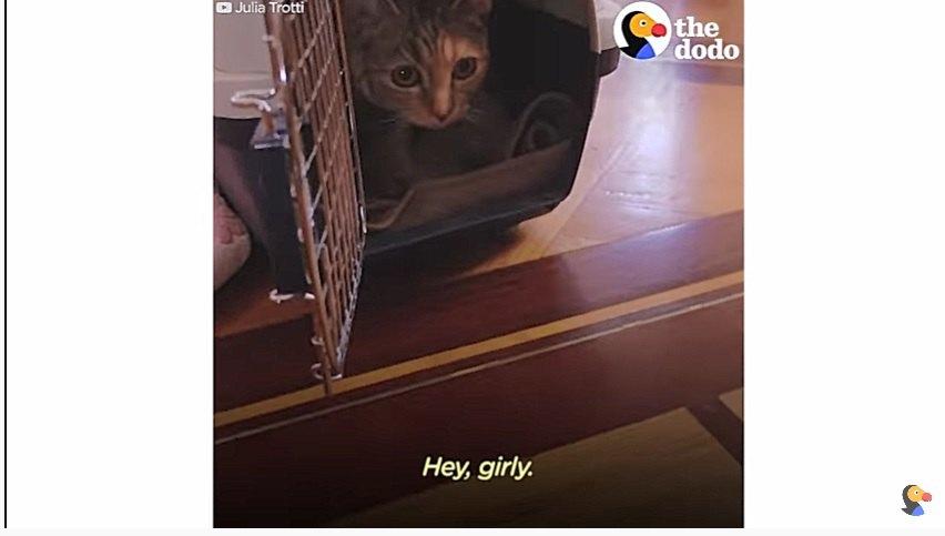 キャリーから出てくる猫