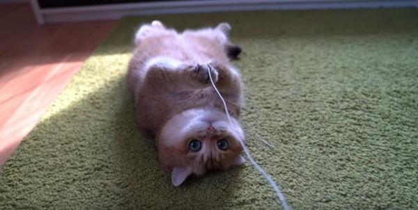 ロープを噛む猫のホシコ