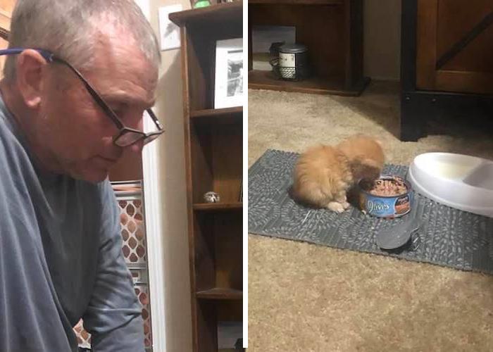 子猫とパパ