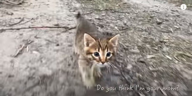 追いかけてくる子猫