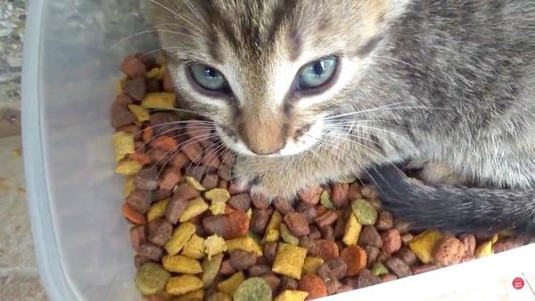 餌箱の中から見つめる子猫