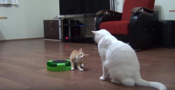 子猫が見る