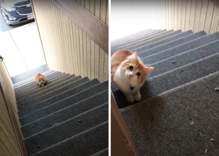 いないいないばあ!の猫