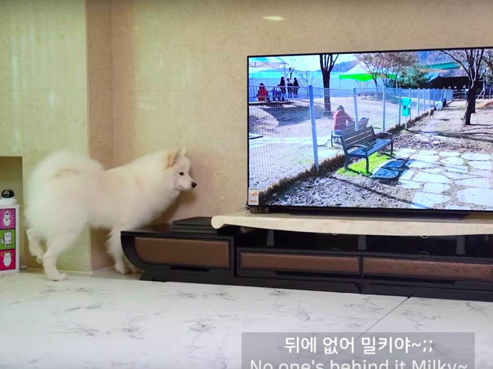 テレビの中の犬を探す犬