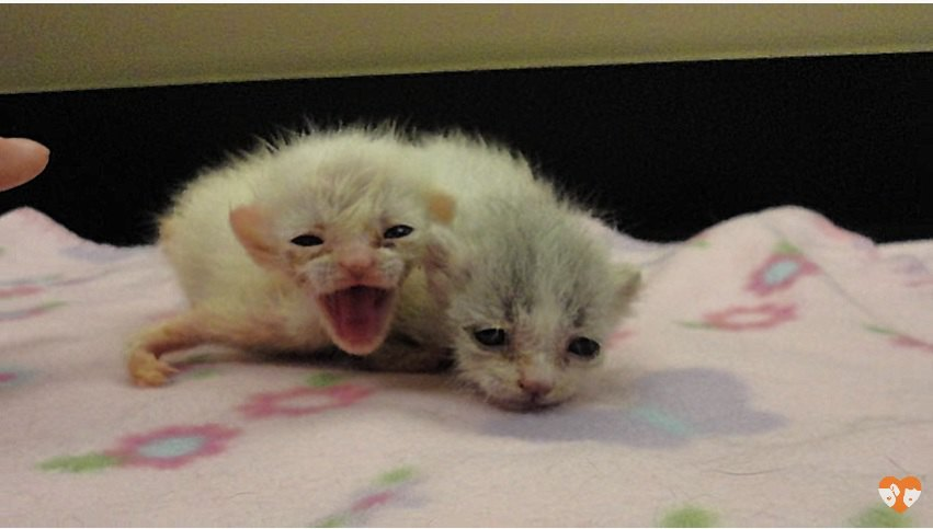 残された二匹の子猫