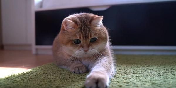 ロープを捕まえた猫のホシコ