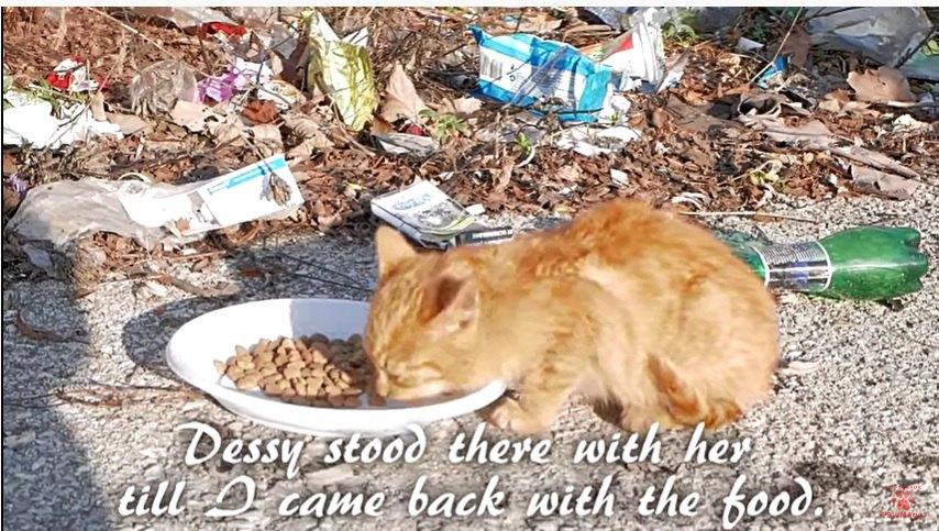 ゴミ捨て場の子猫にキャットフードを与える