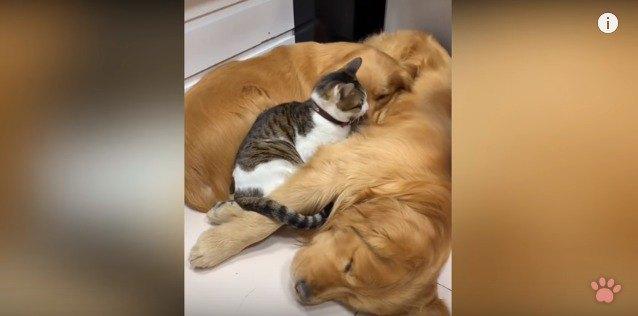 犬の顔を舐める猫