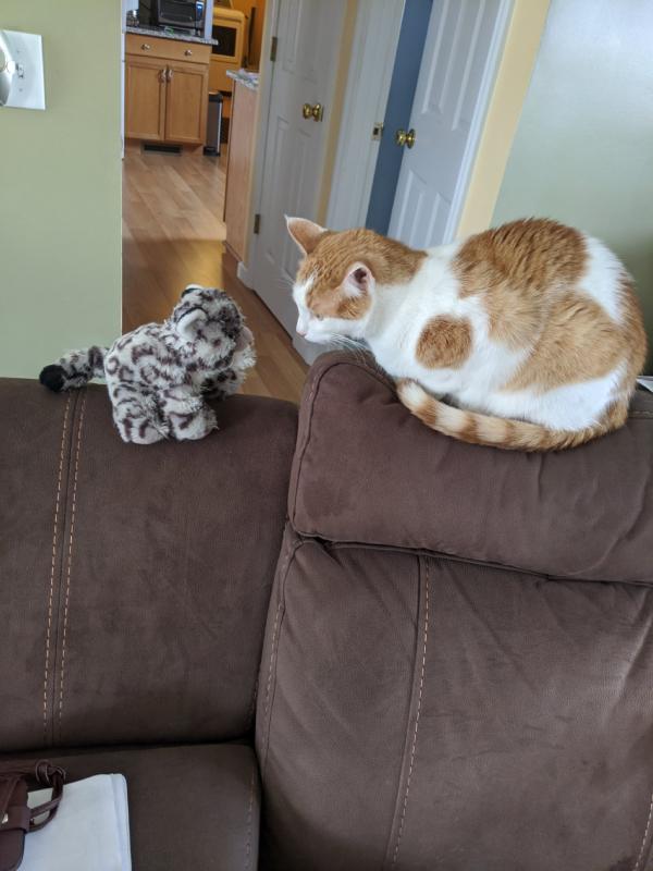 ぬいぐるみと対面した猫