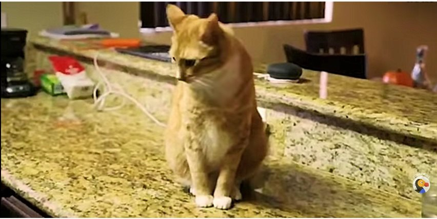 物を落とす猫