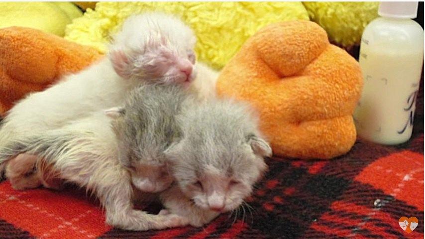 捨てられていた三匹の子猫
