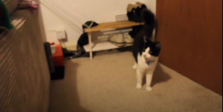ぶっといしっぽの猫